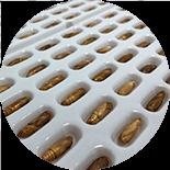 Algenex, nueva tecnología para producir vacunas